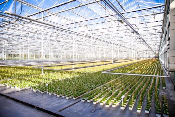 Agriware trainingen software voor tuinbouw