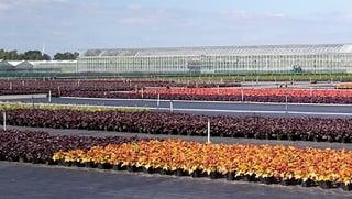 Buiten Teelt Vaste Planten