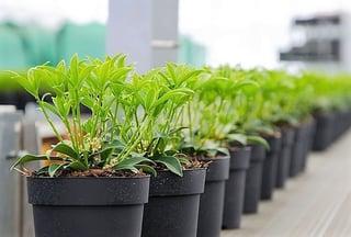 Vaste planten aflever software