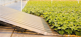 Raap machine jonge groente planten