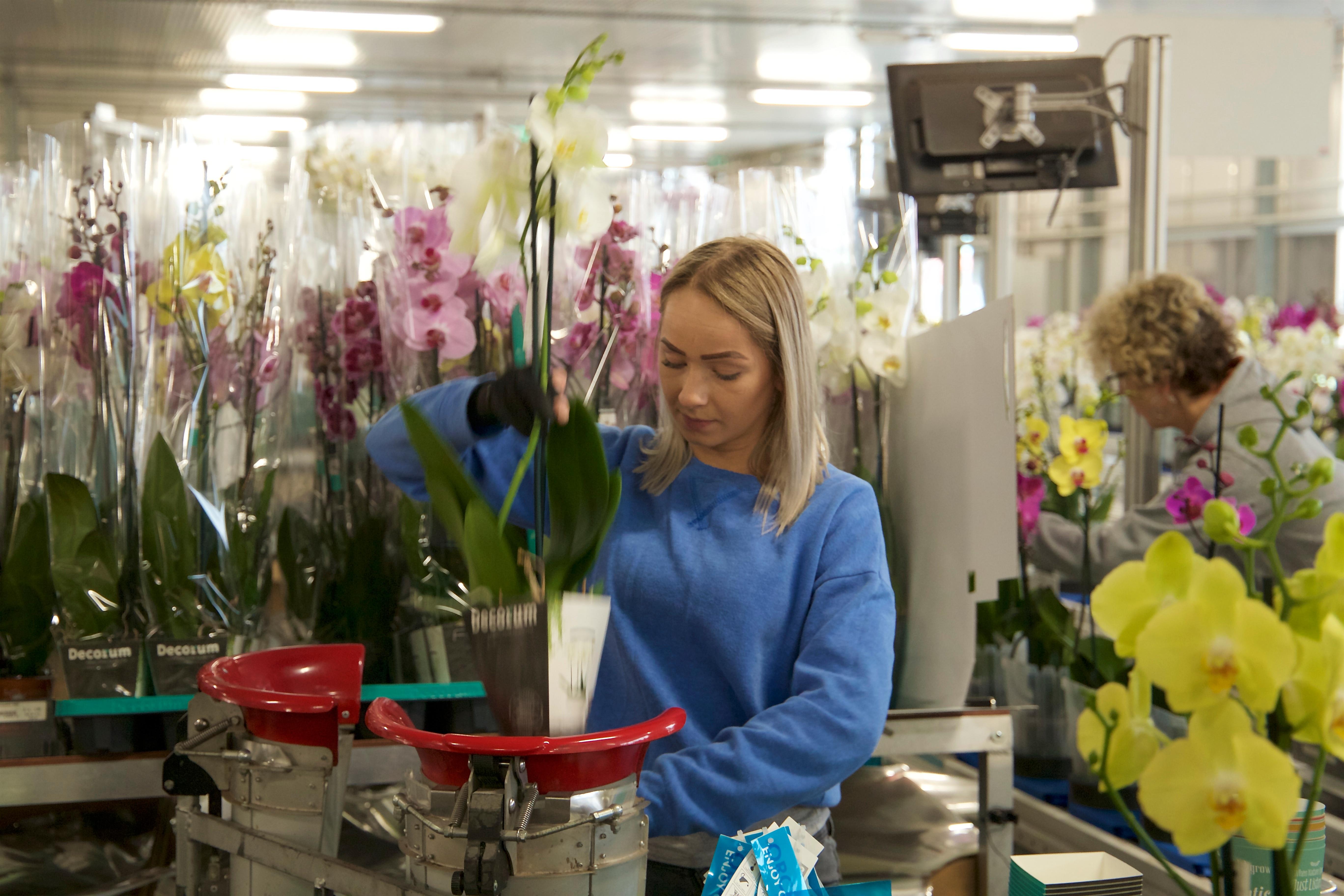 Verkoop planten software Mprise Agriware