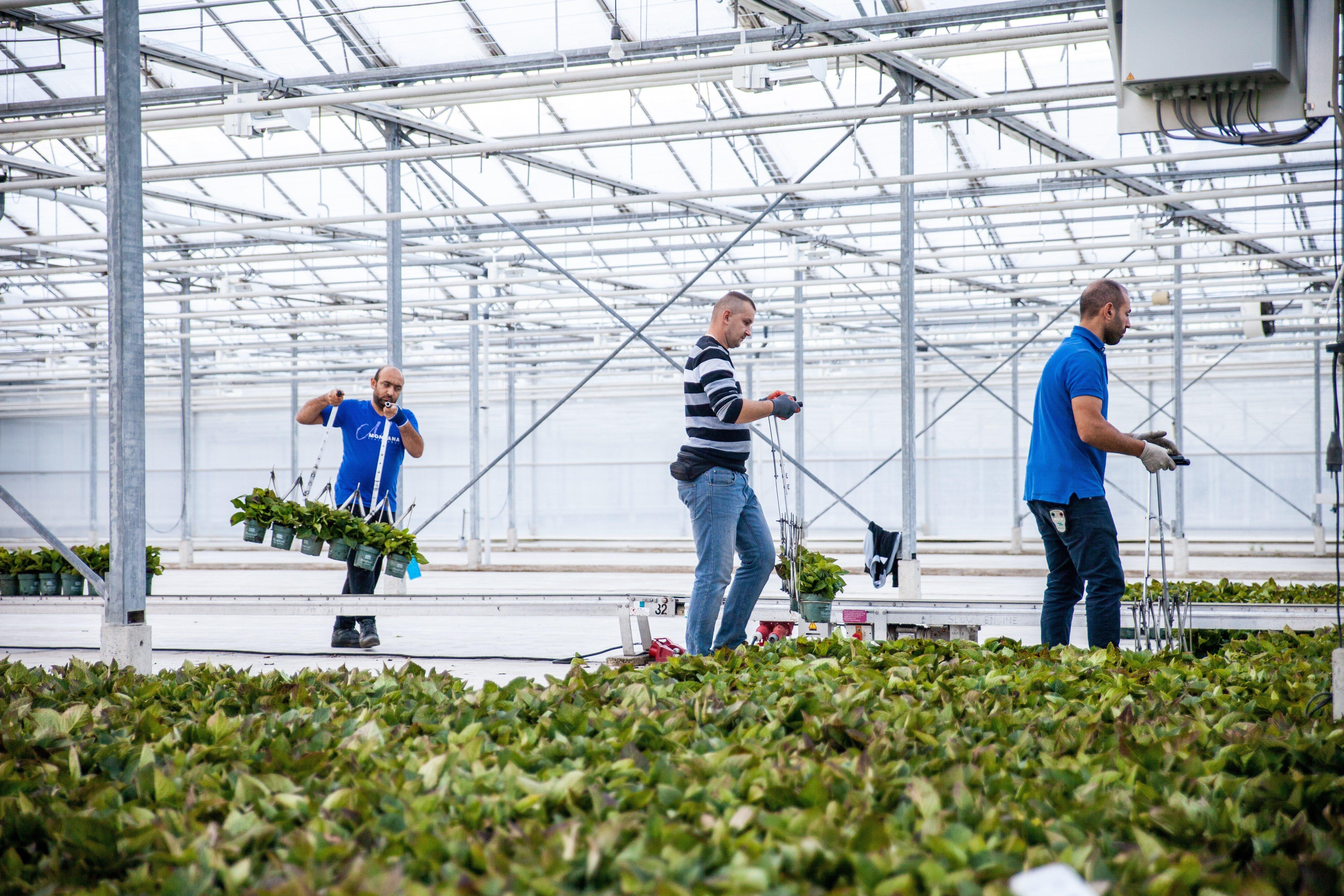 Welchen Wert hat eine branchenspezifische Software für Gartenbau-Unternehmen?