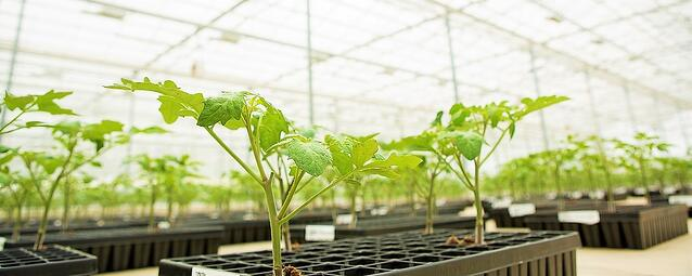 Agriware Greenhouse Grower Software - Young Vegetable Plant Nurcery