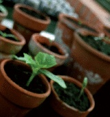 Potplanten bloeiend en groen