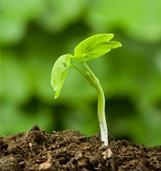 Jonge planten opkweek