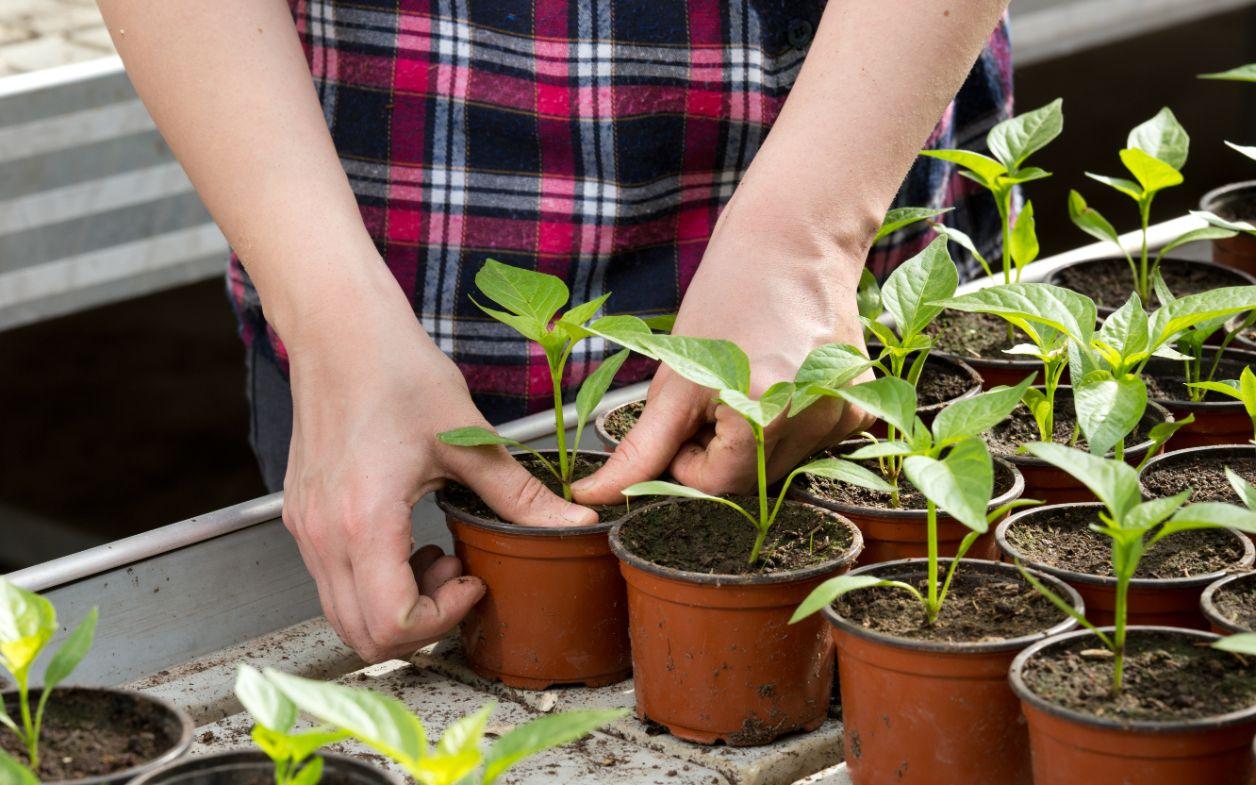 Als potplantenkweker de klant beter begrijpen met CRM'
