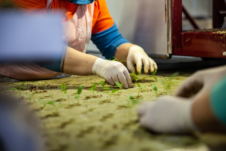 How can I save on labor costs in horticulture?